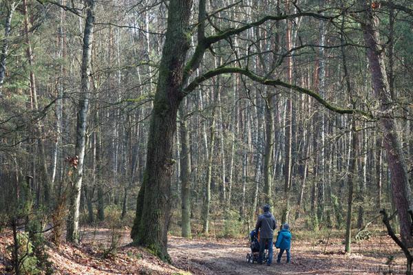 Taki człowiek mały w tym lesie...