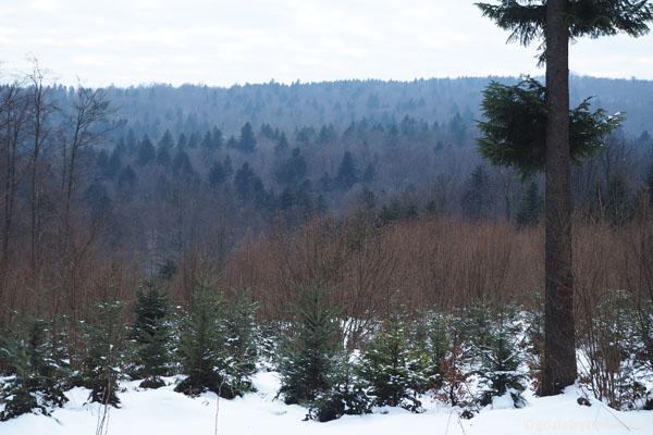 Ten las bardzo nam się spodobał.