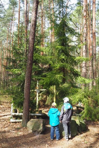 Mogiła nieznanego polskiego żołnierza jest ukryta w lesie.