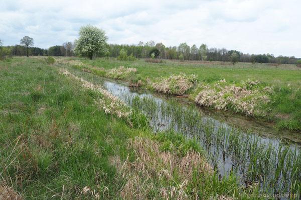 Przecinamy Kanał Ł-9, 'zabierający' wodę z Puszczy.