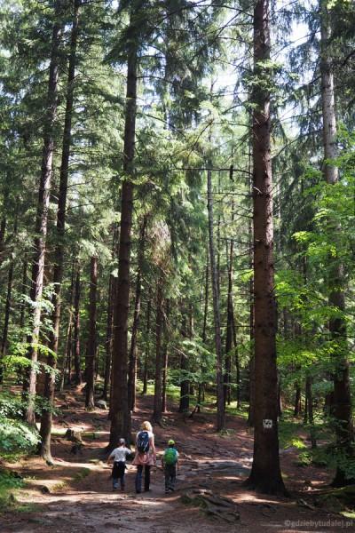 Do Chybotka wiedzie piękny leśny szlak.