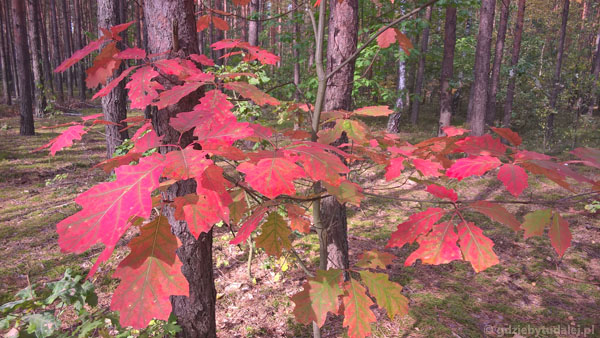 Polujemy na piękne kolory jesieni.