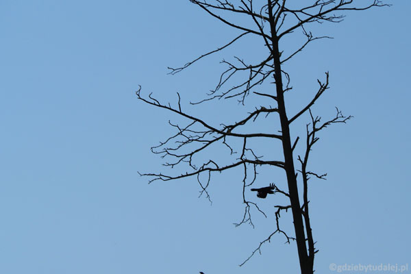 Wrrr... Ostatni kormoran odlatuje nam z kadru...