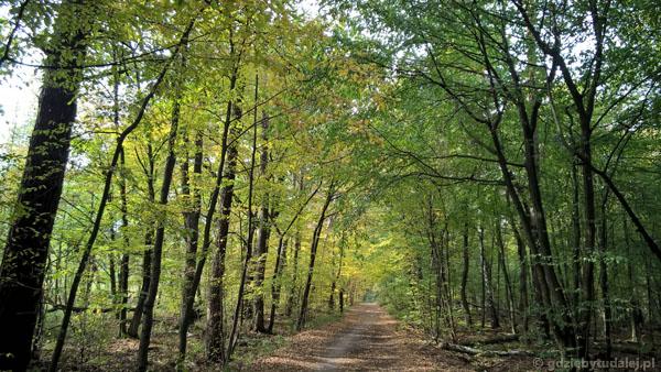 Ścieżka wiedzie nasypem - wokół podmokłe tereny.