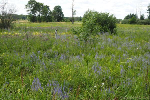 Podmokłe tereny porasta bujna roślinność