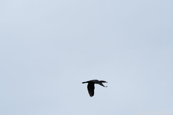 Dobrze widać piękną pracę ich skrzydeł.