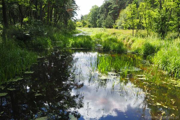 Kanał Łasica zaadoptowany przez naturę