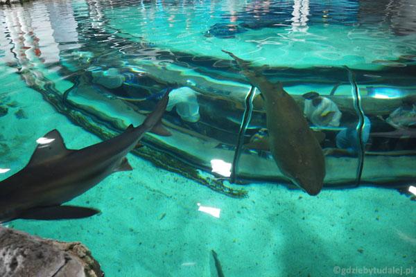 Największa atrakcja dla wszystkich - basen z rekinami.