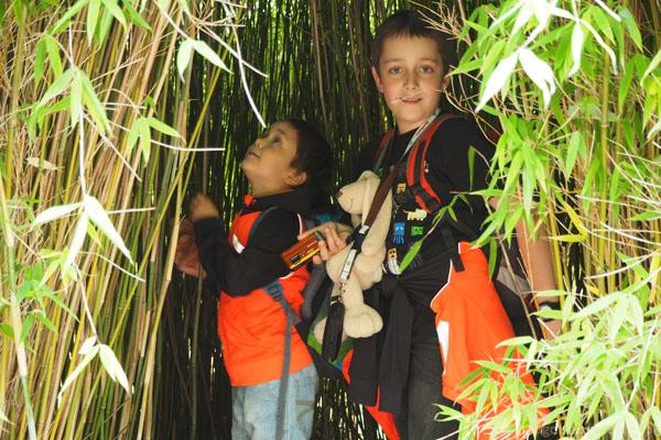 Wśród bambusów można się świetnie chować