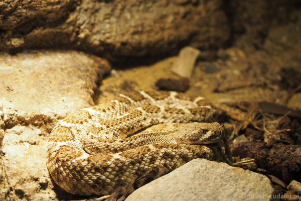 ... i różne gatunki węży