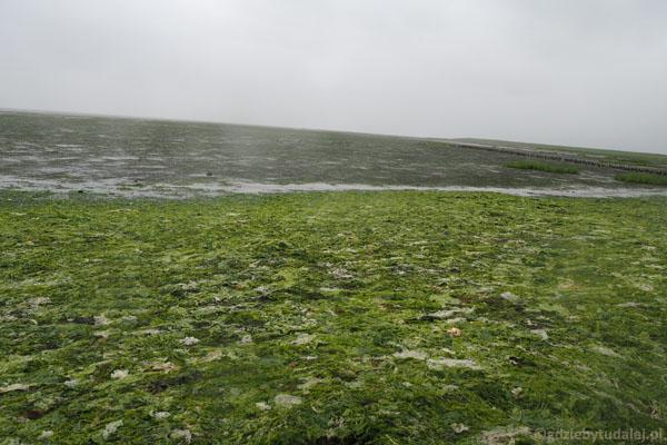 Glonowa sałatka pozostawiona dla nas przez odpływ