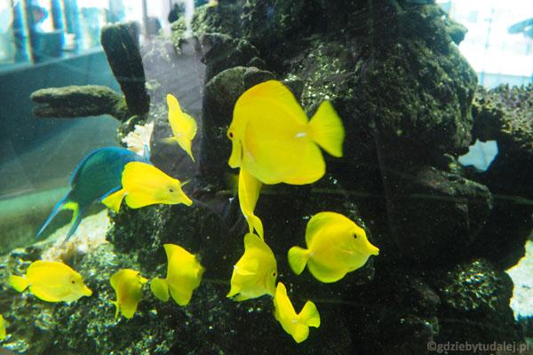 Te rybki witają i żegnają turystów