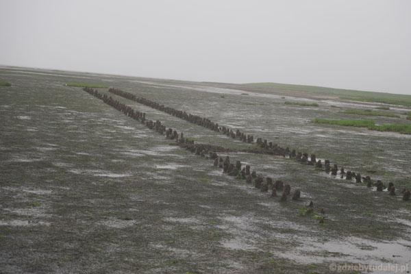 Palisady chronią przed sztormem i pomagają gromadzić żyzne osady..