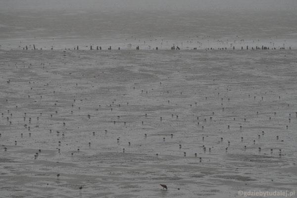 ...i widzimy, jak setki ptaków uwiajają się na dnie morza