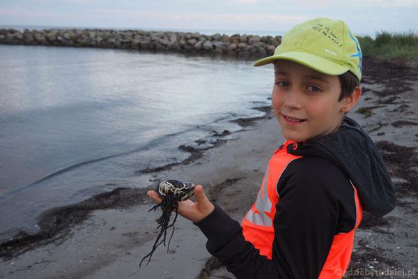 Można znaleźć prawdziwe morskie skarby