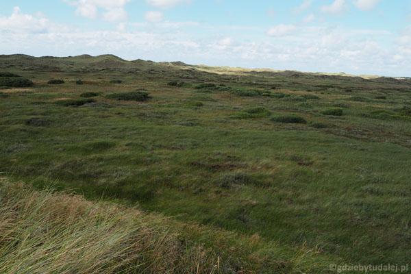 Niesamowite porośnięte trawą wydmy na południowy zachód od Skagen