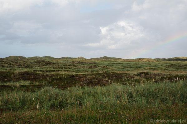 Z wędrującymi piaskami walczono przez nasadzenia wydmowej roślinności