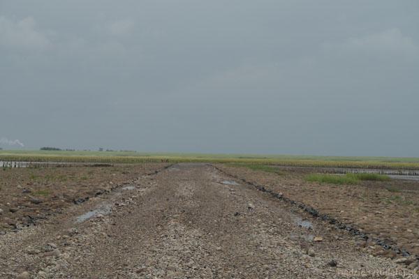 Tak wygląda droga prowadząca na Mandø