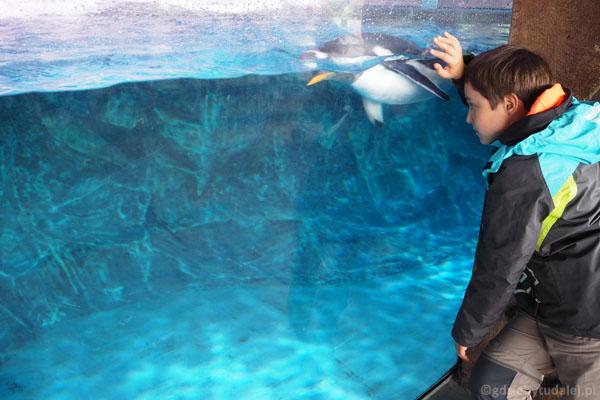 Zatoka pingwinów. Szyba umożliwia obserwację nad wodą i pod wodą