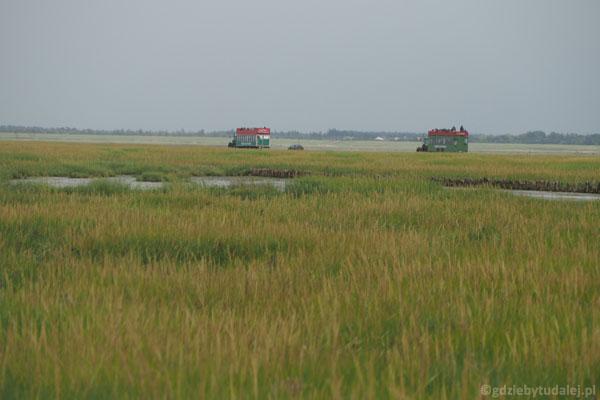 Na wyspę można przeprawić się przyczepą ciągniętą przez traktor