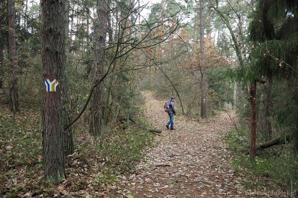 Na rozgałęzieniu teraz wybieramy niebieski szlak, żółtym wrócimy na koniec wycieczki.