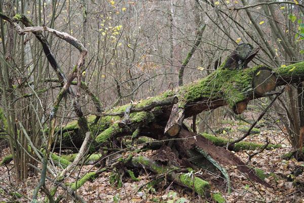 Obszar ochrony ścisłej Krzywa Góra