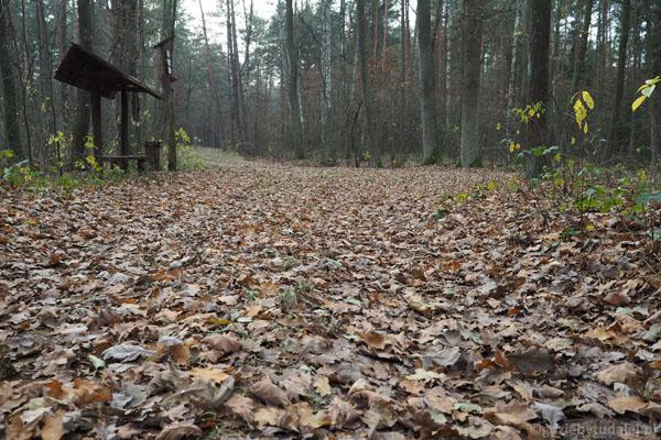 Stąd zaczyna się najpiękniejszy liściasto-jesienny odcinek dzisiejszej trasy