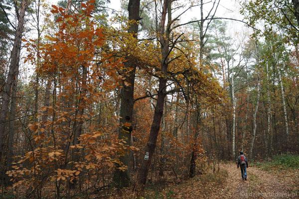 Gdzieniegdzie zachowały się jeszcze piękne kolory jesieni
