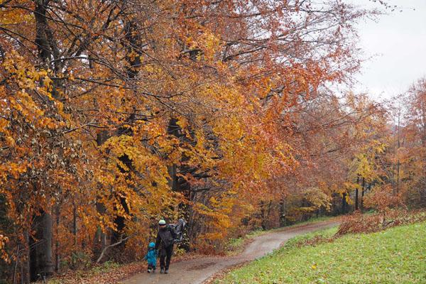 Grześ najpierw dzielnie idzie sam. Kolory jesieni są bajkowe.