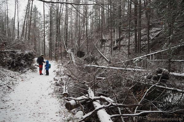 Potok ku Dziurze zawalony drzewami - to ślady wiatrołomu z 2013 r.