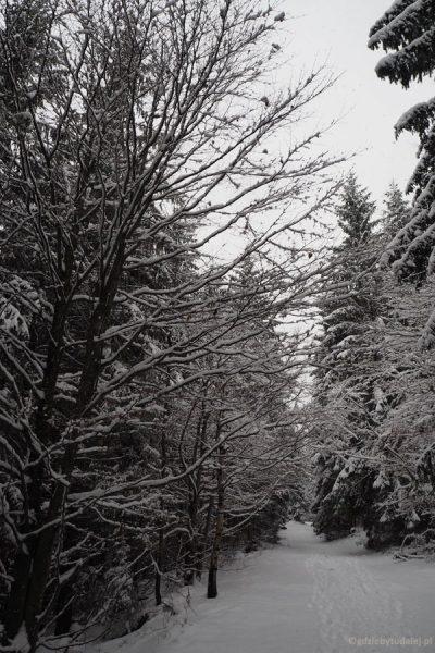 Zima potrafi zachwycić.