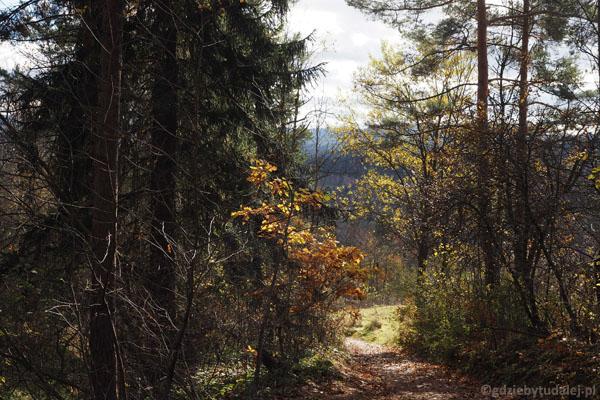 Po kilkunastu minutach opuszczamy polany i szlak wprowadza w las.
