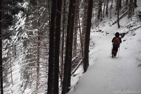 Szlak przyjemnie trawersuje lesiste zbocze.