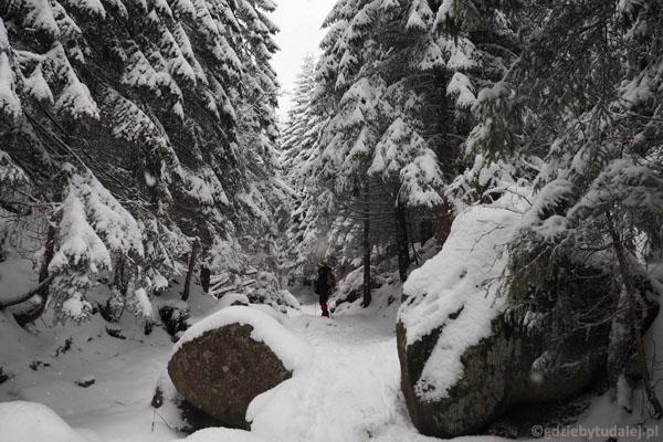 Wszystko przykrywa coraz grubsza warstwa śniegu.