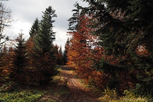 Przed szczytem Lubonia jesień po raz kolejny zmienia dekoracje.