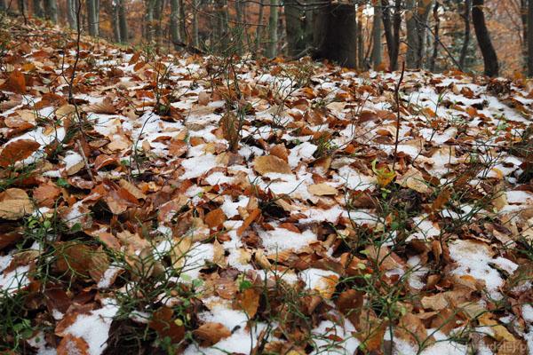 W okolicy szczytu liście pokrywa cieniutka warstwa świeżego śniegu.