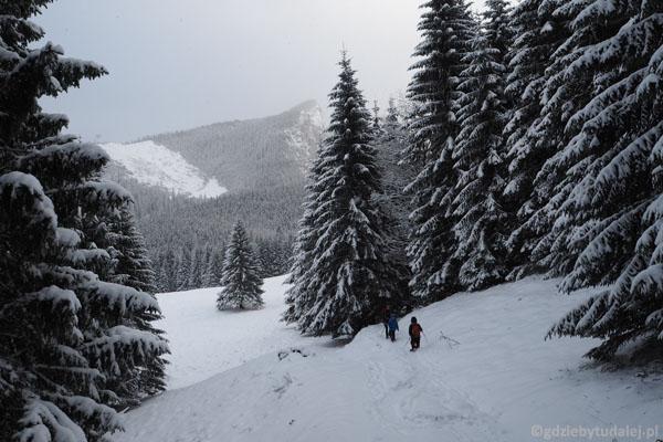 Szlak wznosi się południową stroną Polany Kalatówki.