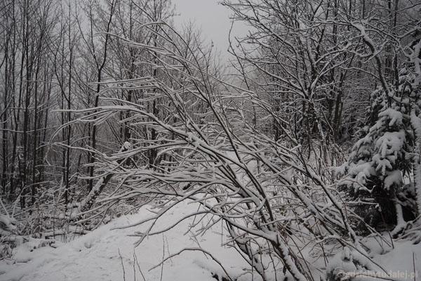 Piękna zima w okolicach Czerwonej Przełęczy.