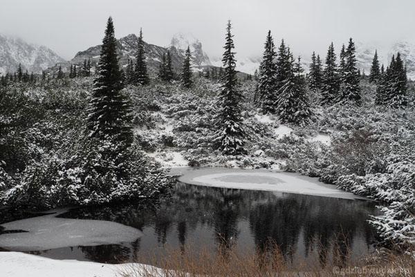 Staw Mokra Jama powoli pokrywa się lodem.
