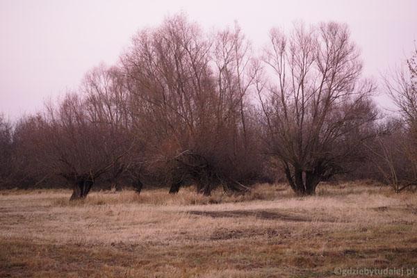 Melancholijny krajobraz idealnie uspokaja.