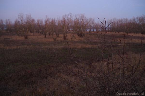 Krajobraz Wiklin Wiślanych miejscami przypomina prerię.