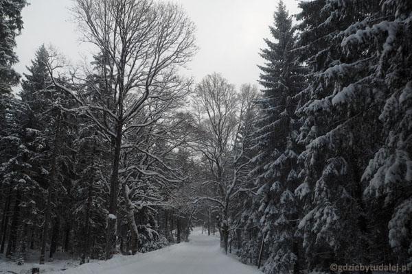 Droga do Bystrzycy Kłodzkiej wiedzie przez piękny zimowy las