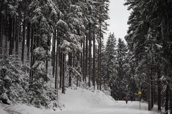 Nasza droga wiedzie przez piękny zimowy las.