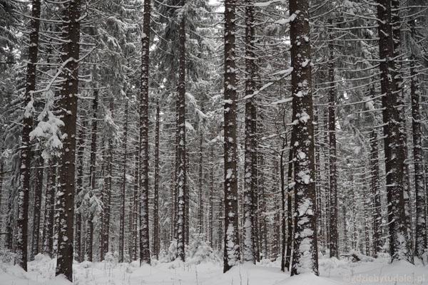Zimowy las jak z bajki