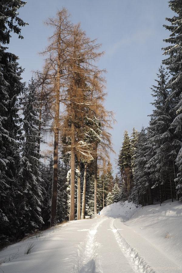 Wracamy. Droga przez zimowy las jest przepiękna.