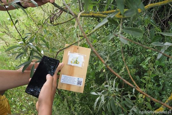 Dodatkową atrakcją są dzisiaj zadania z wakacyjnego spaceru z Wodnikiem Szuwarkiem - najpierw szukamy roślin leczniczych.